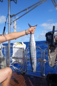 The wahoo...everyone envied us on arrival for this catch.